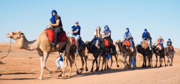 专属骆驼团队